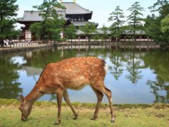 Нара – город и эпоха